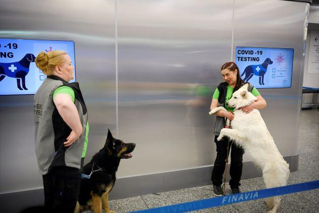 Ελσίνκι: Στο αεροδρόμιο που πήραν σκυλιά για να μυρίζουν τον κορονοϊό | HuffPost Greece
