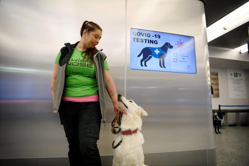 Το αεροδρόμιο του Ελσίνκι χρησιμοποιεί σκύλους για να μυρίζουν τον κορωνοϊό | LiFO