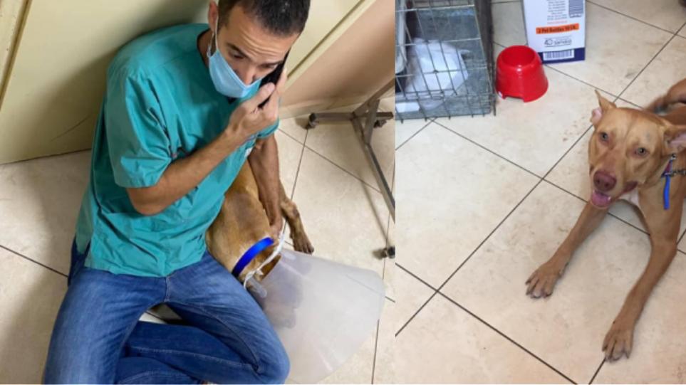 Κτηνωδία στα Χανιά: «Σοκαριστικό το θέαμα», λέει ο κτηνίατρος για τον σκύλο που βασανίστηκε
