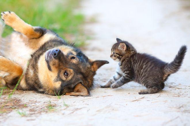 Παγκόσμια Ημέρα Ζώων: Η ζωή των αδέσποτων στην εποχή του κορονοϊού