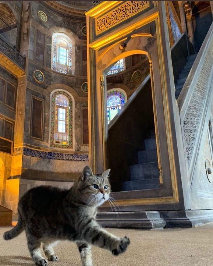 Γνωρίστε την Γκλι, τη γάτα που ζει πάνω από 14 χρόνια στην Αγία Σοφία στην Κωνσταντινούπολη - Περίεργα-Funny - Athens magazine