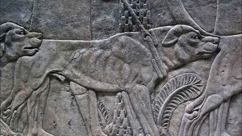 Περίτας: Το αγαπημένο σκυλί του Μεγάλου Αλεξάνδρου.. | iEllada.gr