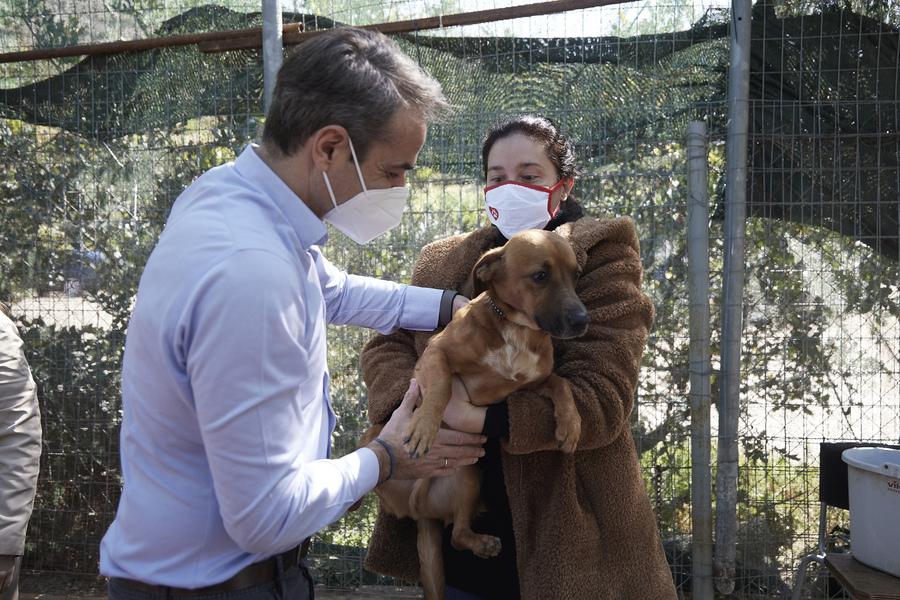 Μήνυμα Μητσοτάκη για την Παγκόσμια Ημέρα Αδέσποτων Ζώων: Ανοίξτε την αγκαλιά σας και σώστε ένα αδέσποτο | ενότητες, πολιτική | Real.gr